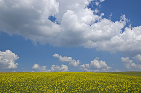 field_and_sky_small